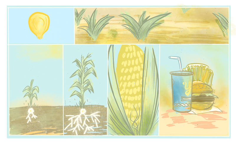 Corn illustration by Will Dinski